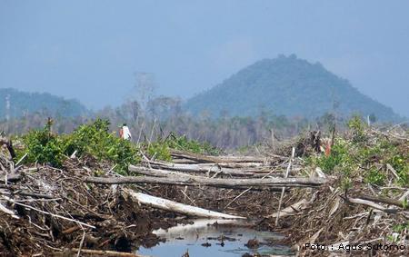 http://hermawanituboim.blogspot.com/2011/06/fakta-50-lebih-hutan-indonesia-rusak.html