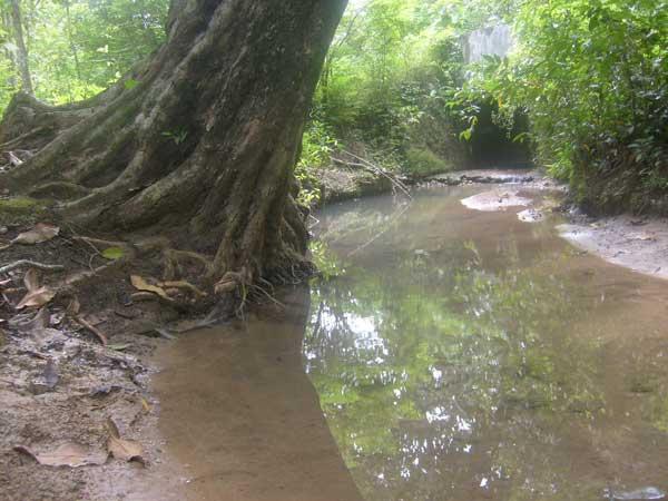 Hutan adalah rumah sumber mata air. Gambar diunduh dari http://cepublora.blogspot.com/2012/08/mata-air-hutan-giyanti-sambong-cepu.html