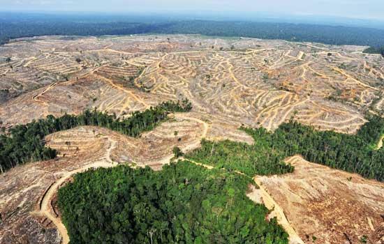Fotok kerusakan hutan di Indonesia. http://pahlawanlangitbiru.wordpress.com/2012/04/22/hari-bumi-sebuah-refleksi-kehidupan/