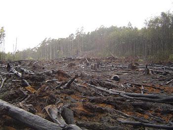 http://kholidazia.student.umm.ac.id/2010/07/08/penggundulan-hutan-tak-dapat-dihindari/